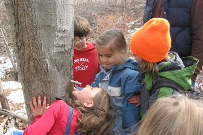 Maple Sugaring with Earth Arts